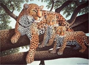 Luipaarden Famillie NIEUW